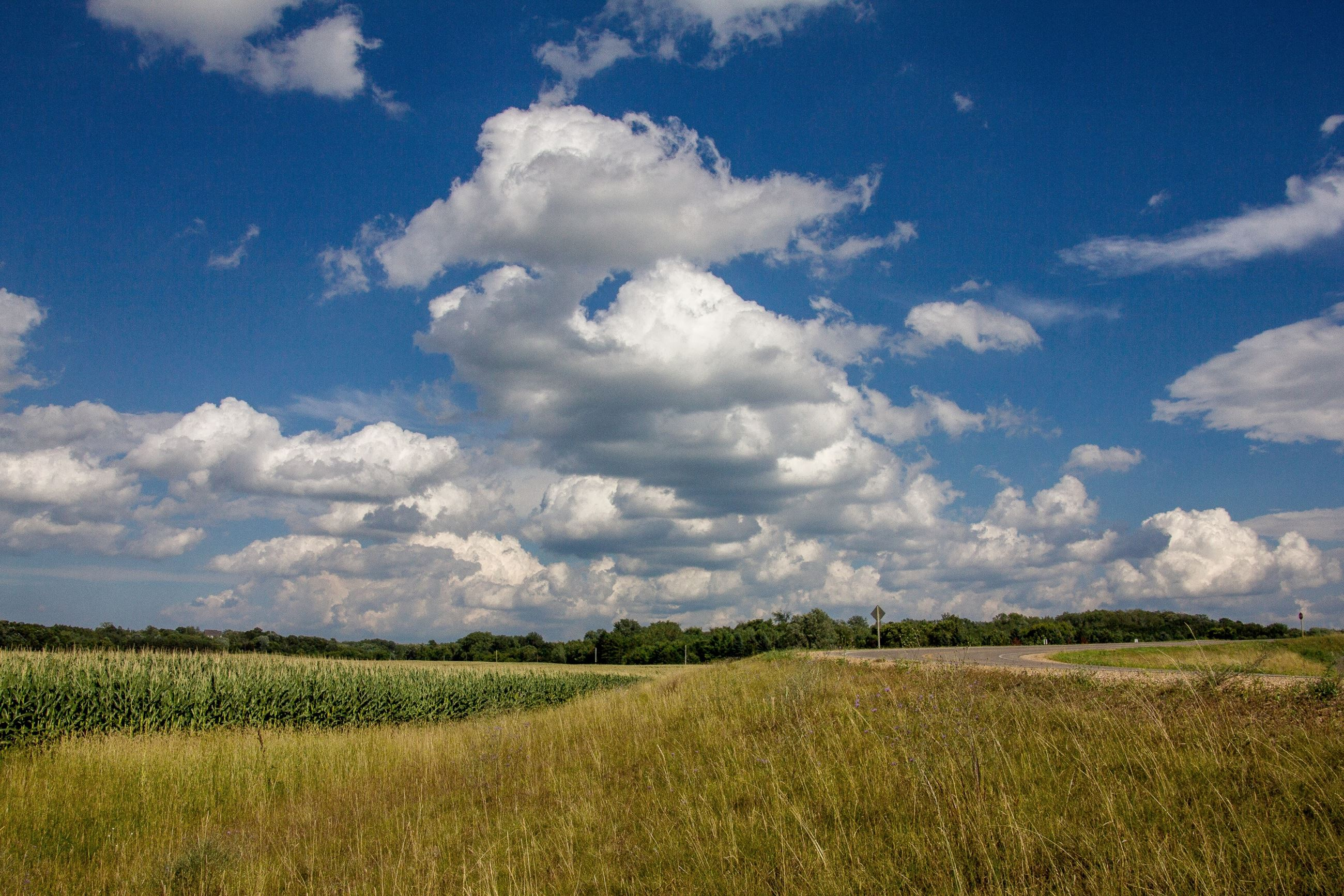 Cornfield with Blue Sky and Clouds